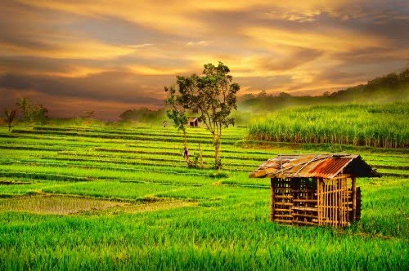 sekotak sawah untuk semeter tanah